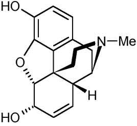 essay on morphine The study has shown that morphine is metabolized to m6g which is a potent analgesic thereby increasing the effectiveness of the drug in some situations.
